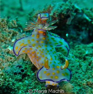 Thought this nudi was rather splendid, unsure as to its n... by Maria Machin 